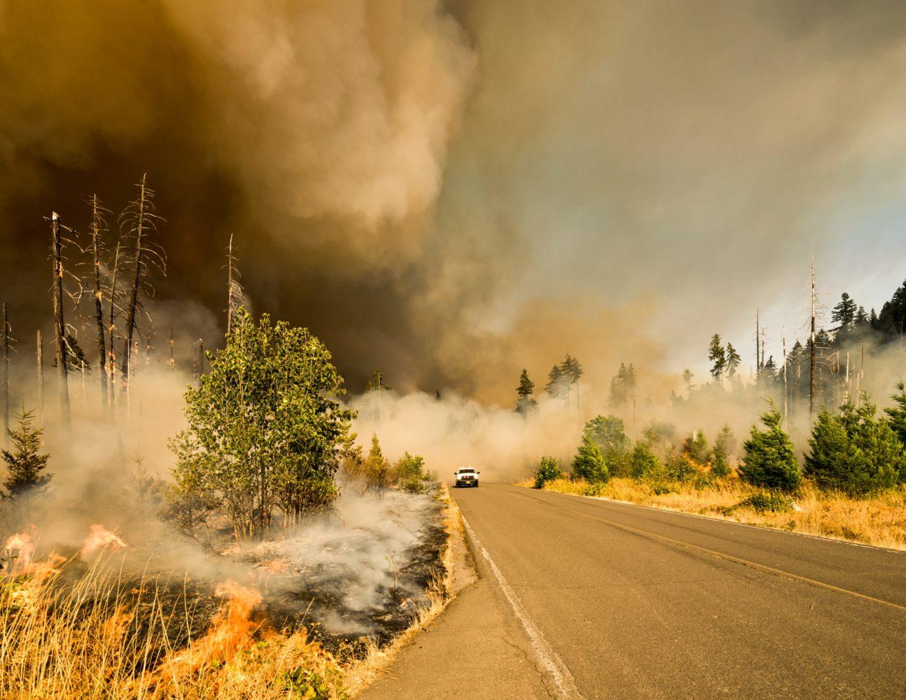 wildfire - mvp pediatric urgent care
